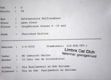 limbra-cat-club-show-2016-11-13-006