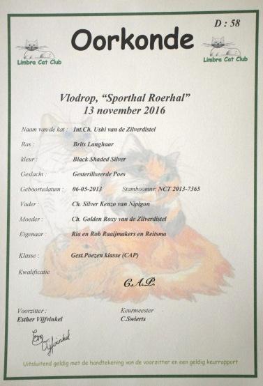 limbra-cat-club-show-2016-11-13-009_certificaat-ushi