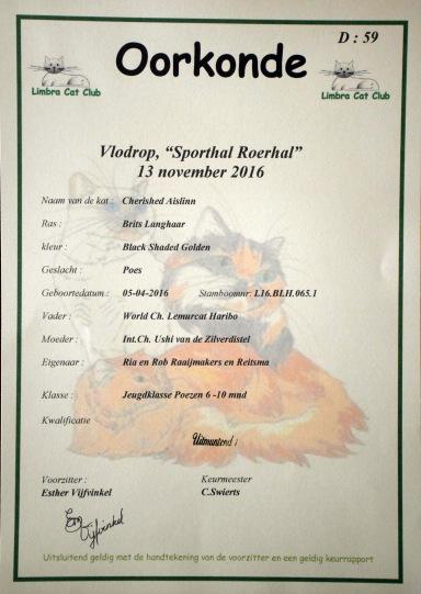 limbra-cat-club-show-2016-11-13-011_certificaat-aislinn
