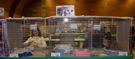 limbra-cat-club-show-2016-11-13-017