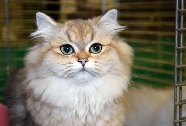 limbra-cat-club-show-2016-11-13-026