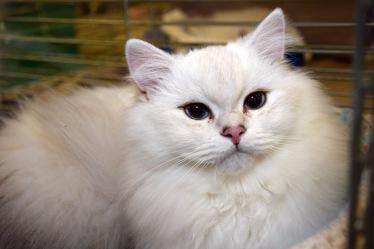 limbra-cat-club-show-2016-11-13-027